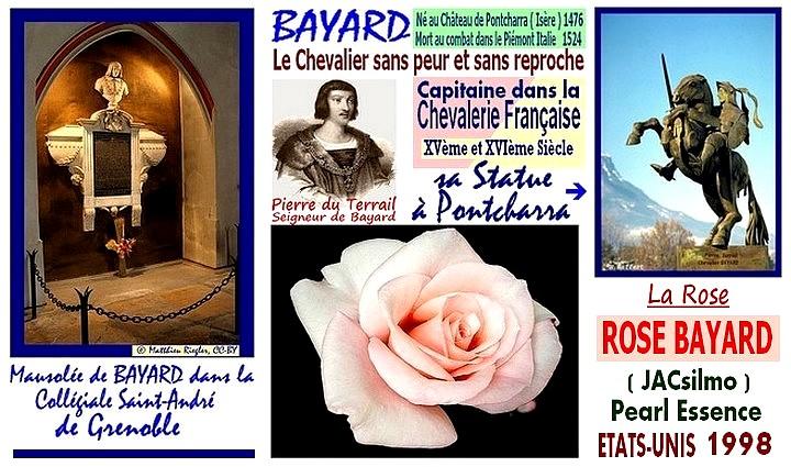 bayard-rose-bayard-jacsilmo-pearl-essence-celebrites-roses-passion.jpg