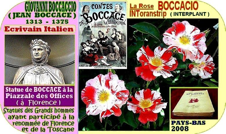 boccacio-rose-celebrites-intoranstrip-roses-passion-interplant-04593-2.jpg