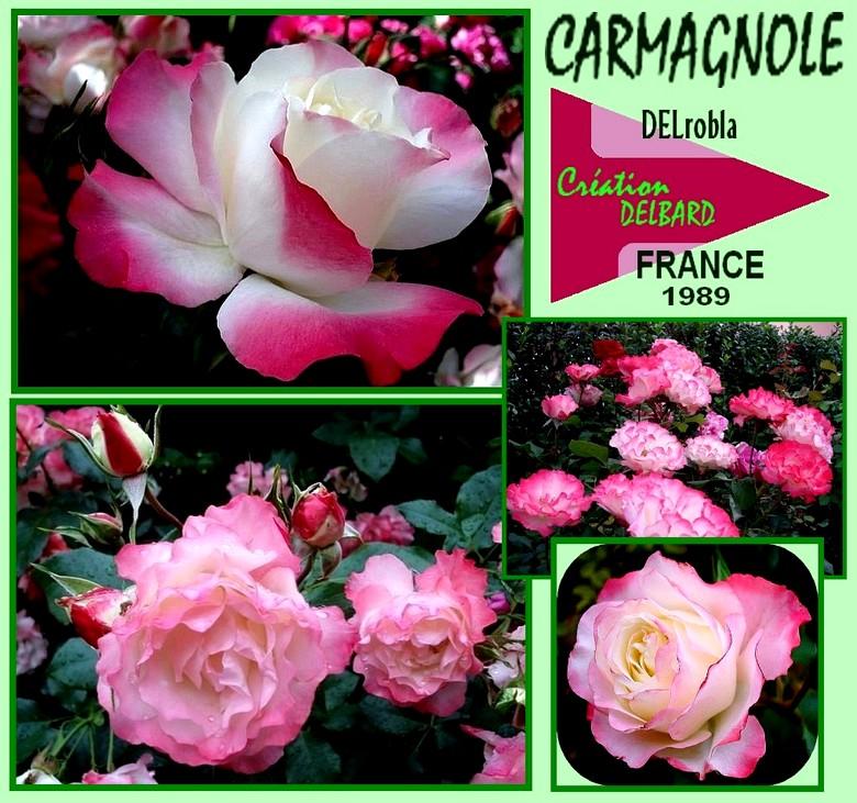 carmagnole-rose-delrobla-roses-passion.jpg