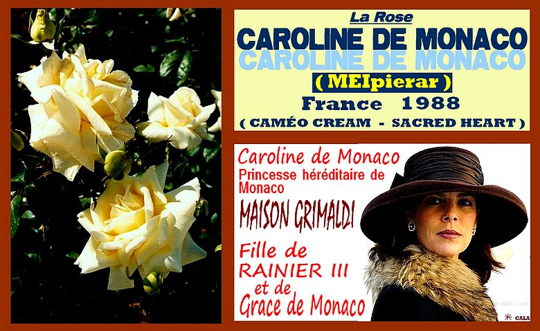 caroline-de-monaco-celebrites-rose-8425.jpg