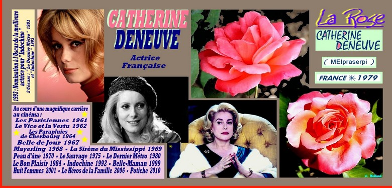 catherine-deneuve-celebrites-rose-8544.jpg