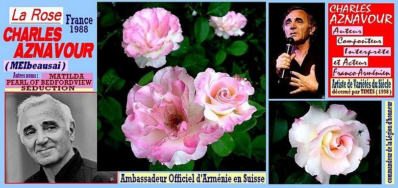 charles-aznavour-rose-celebrites-roses-passion-4512.jpg