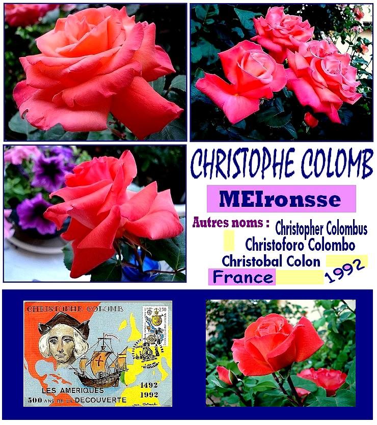 christophe-colomb-rose-orange-cuivre-roses-passion-8822.jpg