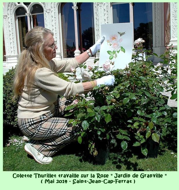 Colette thurillet rose jardins de granville 04 mai 2014 saint jean cap ferrat 41254
