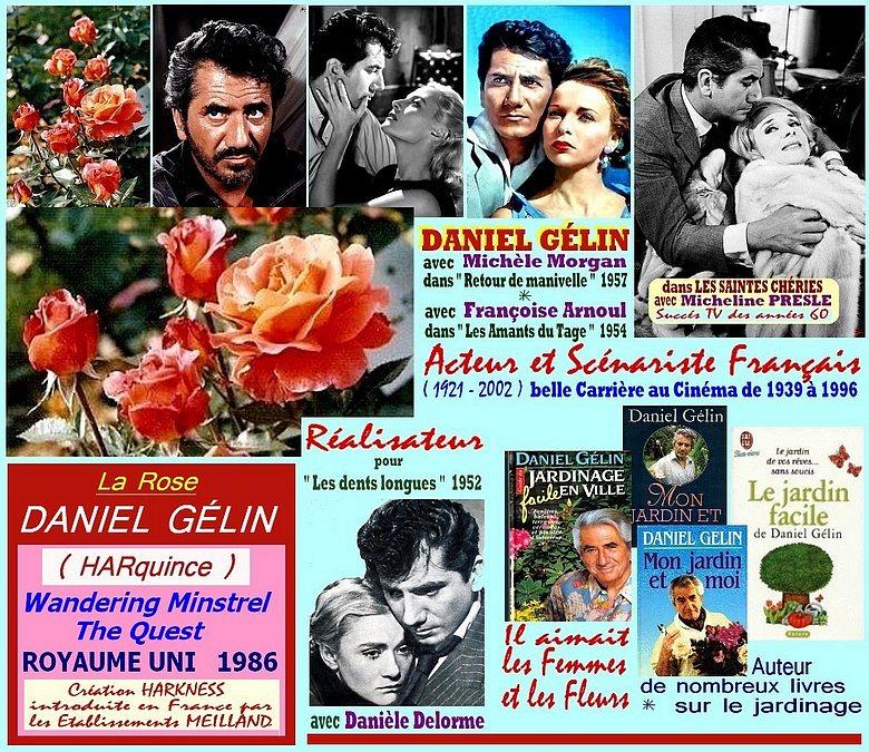 daniel-gelin-rose-celebrites-harquince-wandering-minstrel-roses-passion.jpg
