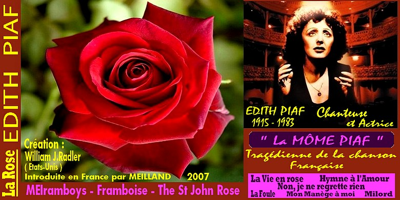 edith-piaf-rose-meiramboys-framboise-celebrites-roses-passion.jpg