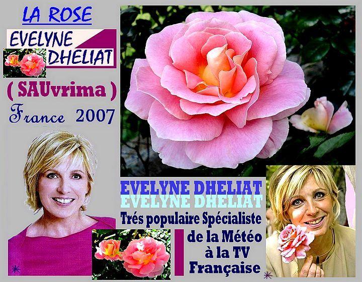 evelyne-dheliat-rose-celebrites-roses-passion-0002.jpg