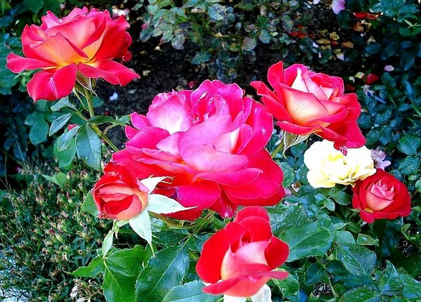 gipsy-rose-2644-1.jpg
