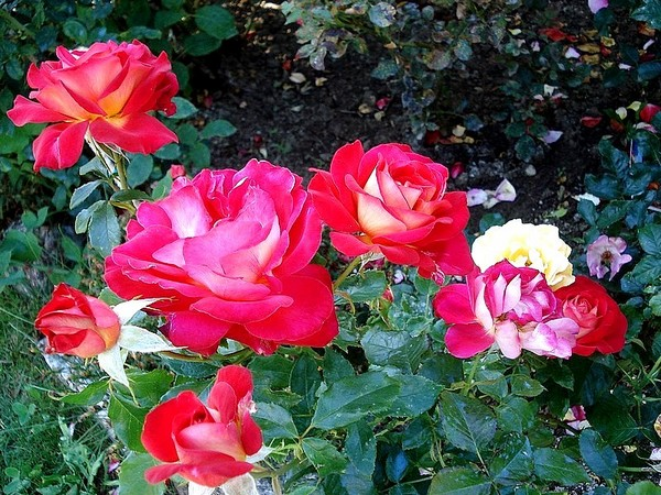 gipsy-rose-2645.jpg