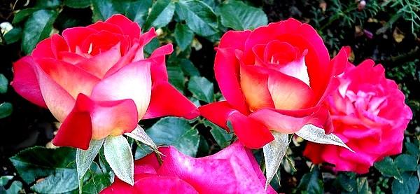 gipsy-rose-2646.jpg