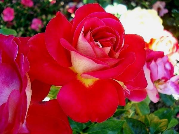gipsy-rose-2647.jpg