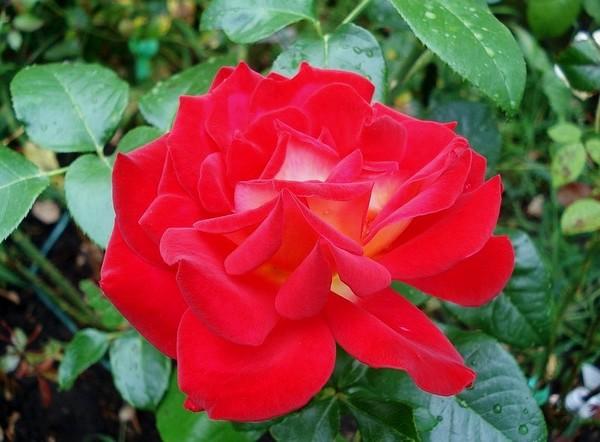gipsy-rose-2649.jpg