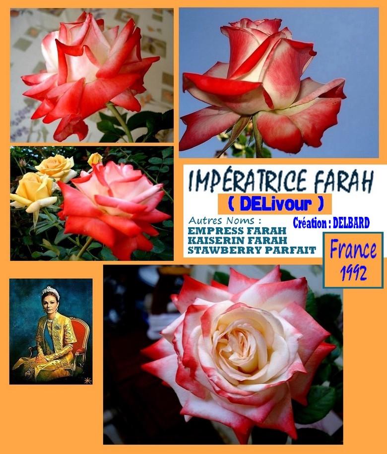 imperatrice-farah-rose-roses-passion-2260.jpg