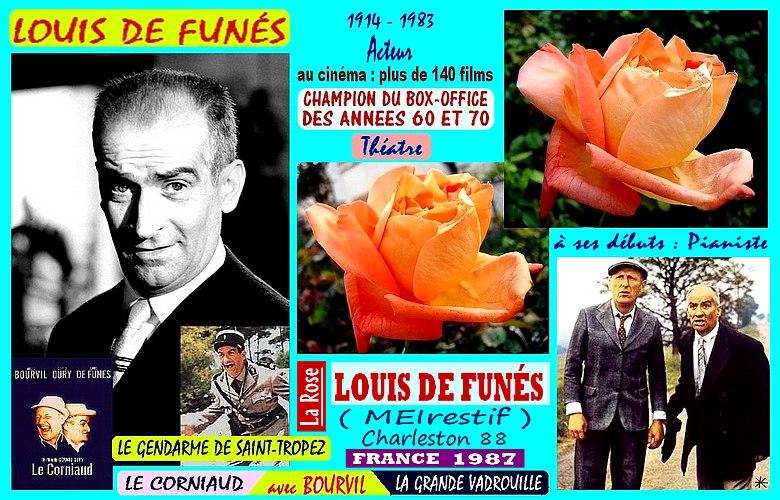 louis-de-funes-rose-celebrites-meirestif-le-corniaud-bourvil-roses-passion.jpg