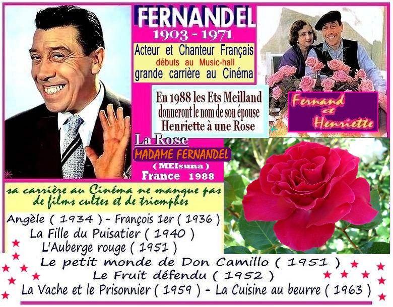 madame-fernandel-rose-celebrites-meisunaj-fernandel-rose-passion-r-2.jpg