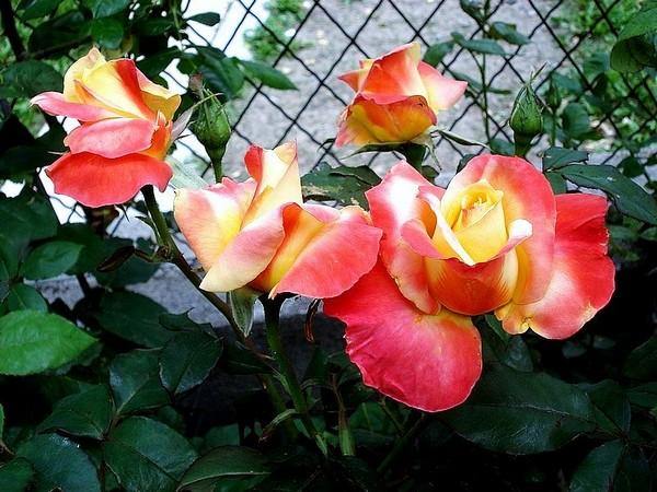 mango-rp-04565.jpg