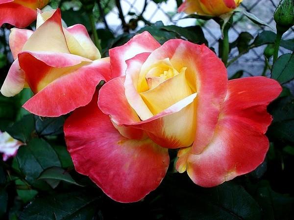 mango-rp-04566.jpg