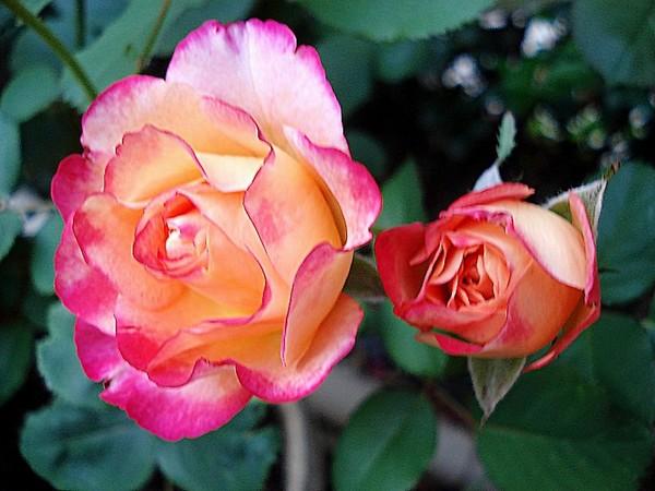 marseille-en-fleurs-rp-05121.jpg