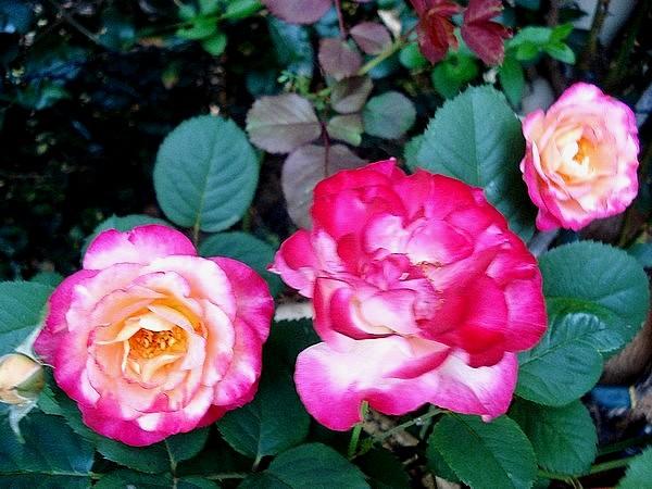marseille-en-fleurs-rp-05138.jpg