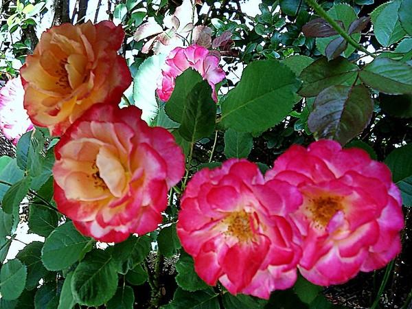 marseille-en-fleurs-rp-05140.jpg