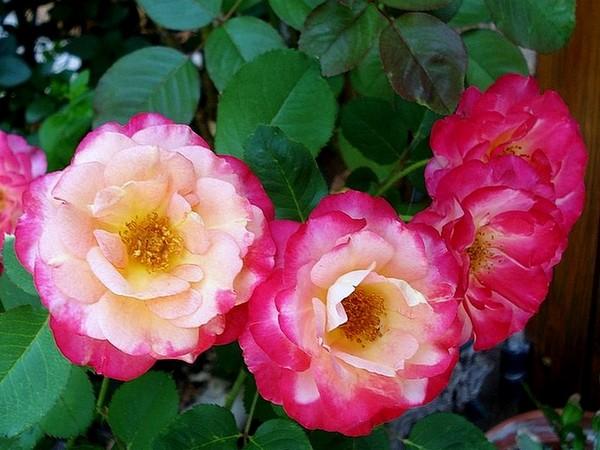 marseille-en-fleurs-rp-05141.jpg