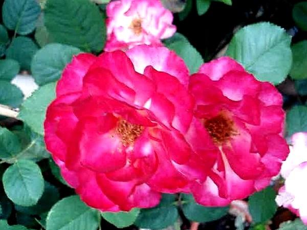 marseille-en-fleurs-rp-5888.jpg