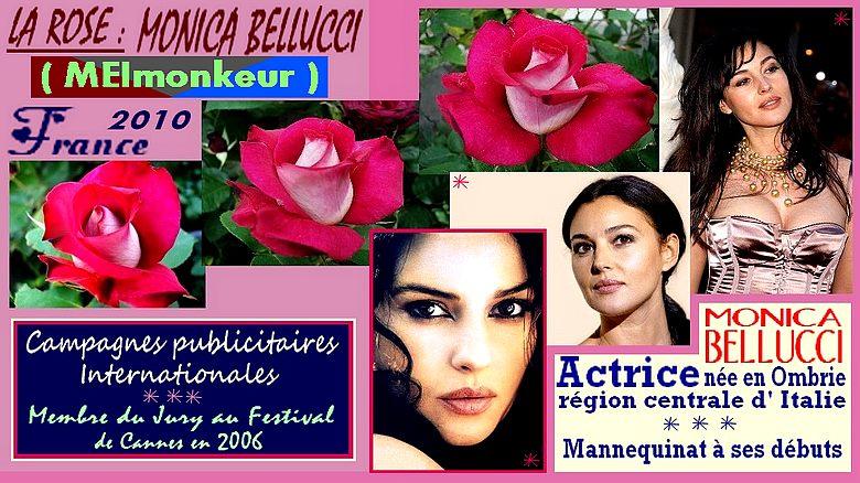 monica-bellucci-rose-celebrites-meimonkeur-roses-passion.jpg