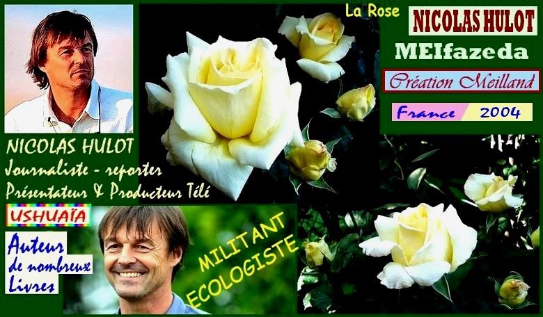 nicolas-hulot-rose-celebrites-meifazeda-roses-passion.jpg