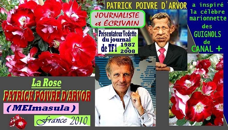 patrick-poivre-d-arvor-rose-celebrites-meimasula-roses-passion.jpg