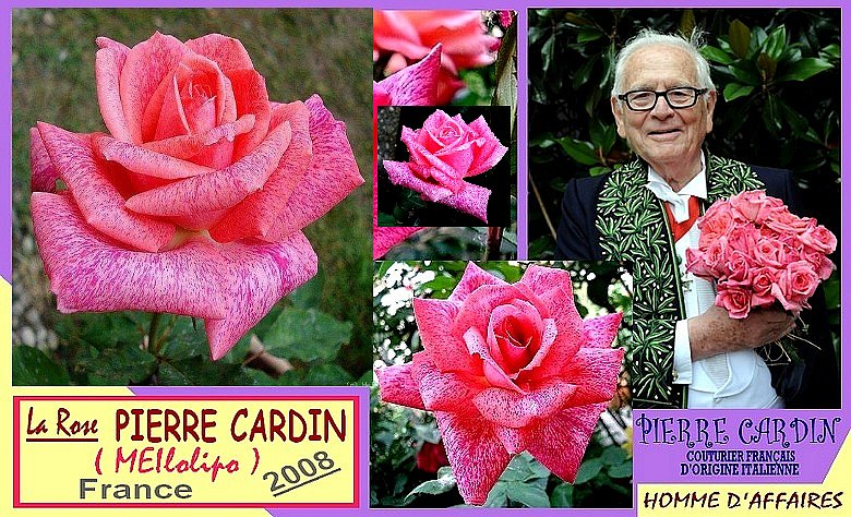 pierre-cardin-rose-celebrites-meilolipo-roses-passion-7846.jpg