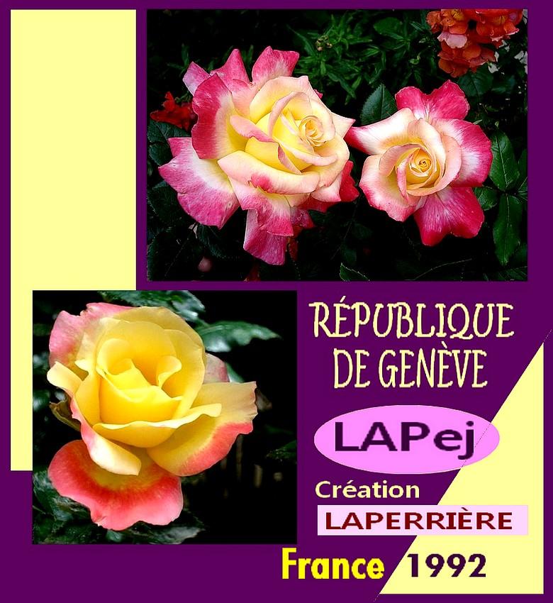 republique-de-geneve-rose-lapej-roses-passion-pave-1.jpg