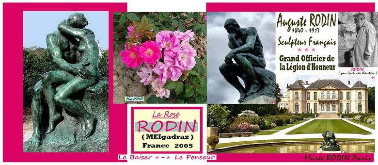 rodin-celebrites-rose-photo-jedmar.jpg