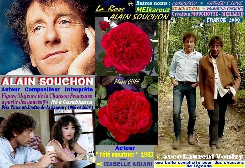 Rose alain souchon meikarouz caruso rouge royale father s love royal red valentina casucci meilland 2000