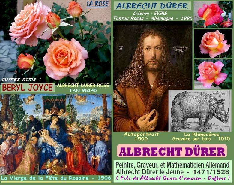Rose albrecht durer beryl joyce tan 96145 evers tantau allemagne 1996