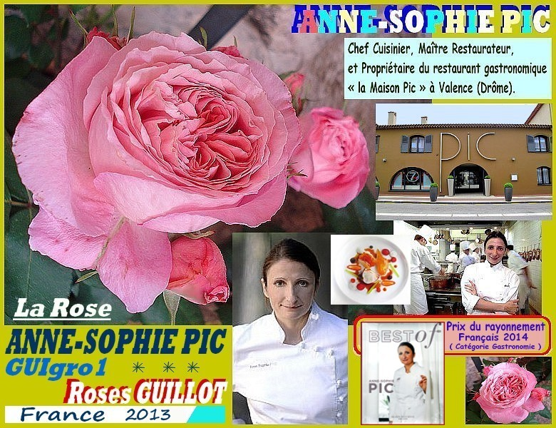 Rose anne sophie pic guigro1 roses guillot france 2013