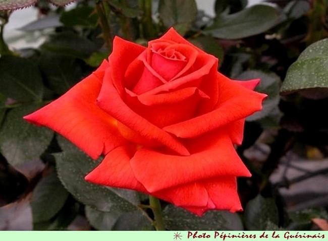 rose-anne-vanderlove-7851.jpg