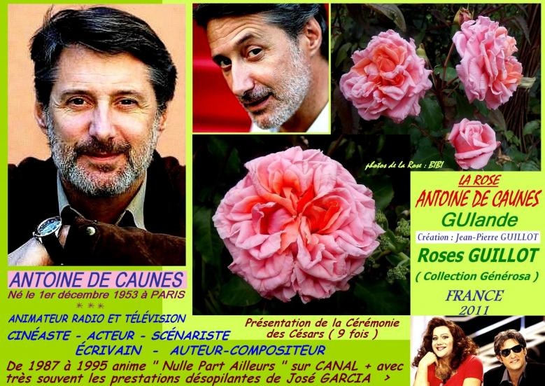 Rose antoine de caunes guiande guillot france 2011 roses passion