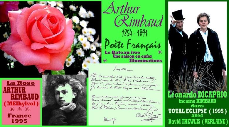rose-arthur-rimbaud-meihylvol-celebrites-roses-passion-r.jpg