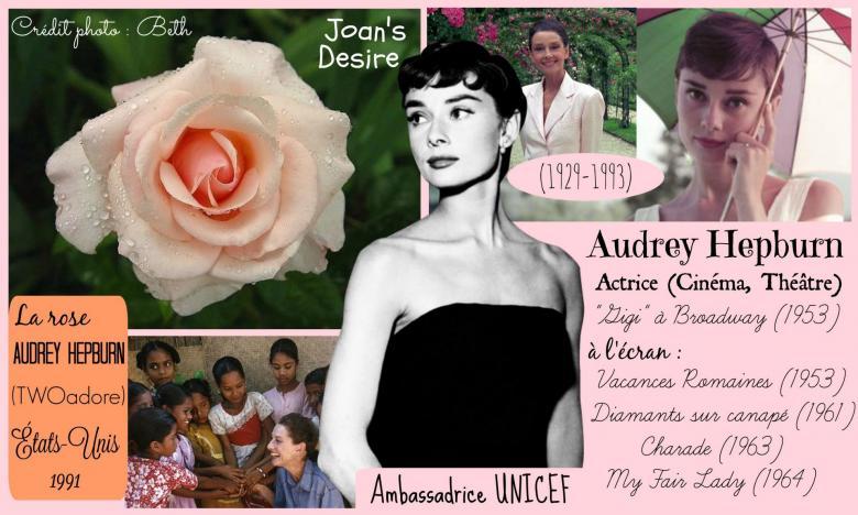 Rose audrey hepburn twoadore joans s desire twomey etats unis 1991 roses passion 2j