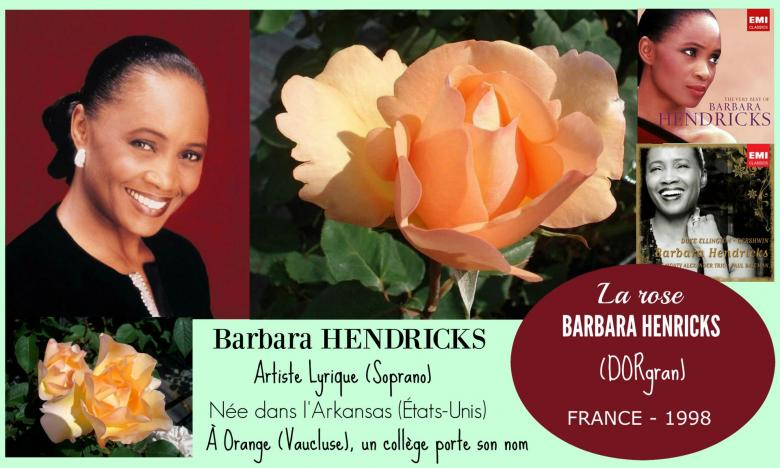 Rose barbara hendricks dorgran dorieux france 1998 roses passion 2 j