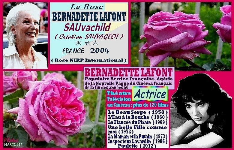 rose-bernadette-lafont-sauvachild-celebrites-sauvageot-roses-passion.jpg