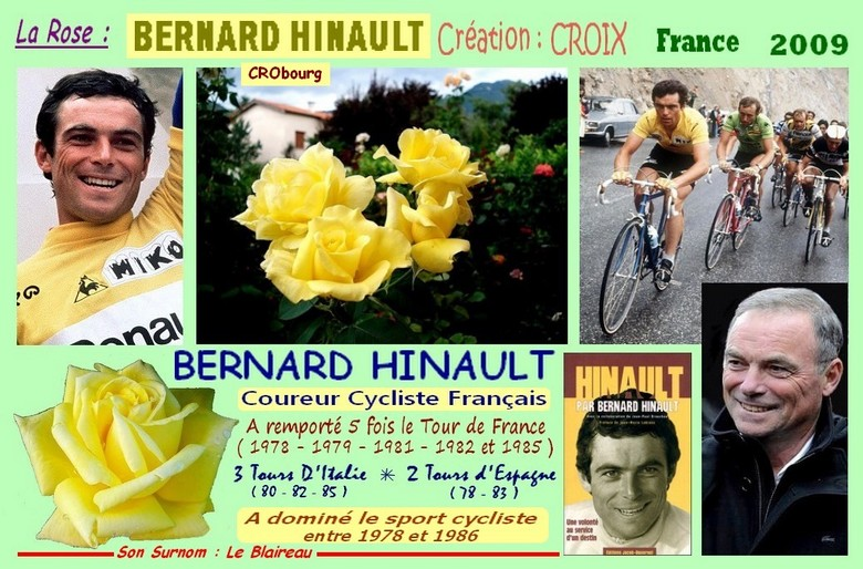 Rose bernard hinault crobourg creation croix france 2009 rosespassion 1