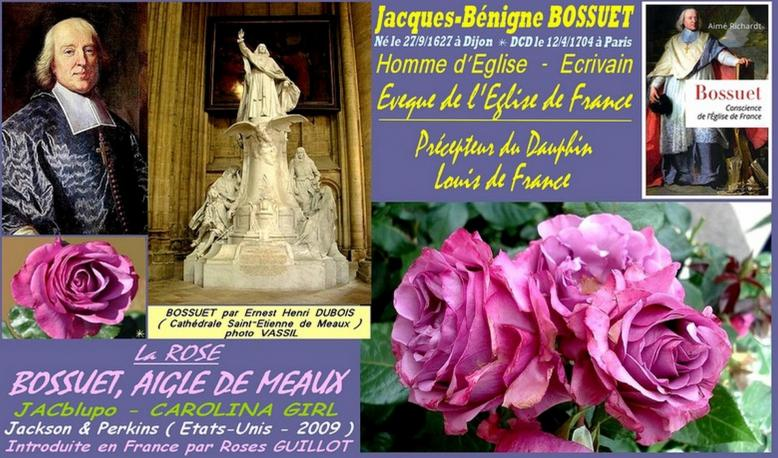 Rose bossuet aigle de meaux jacblupo carolina girl jackson et perkins roses guillot roses passion
