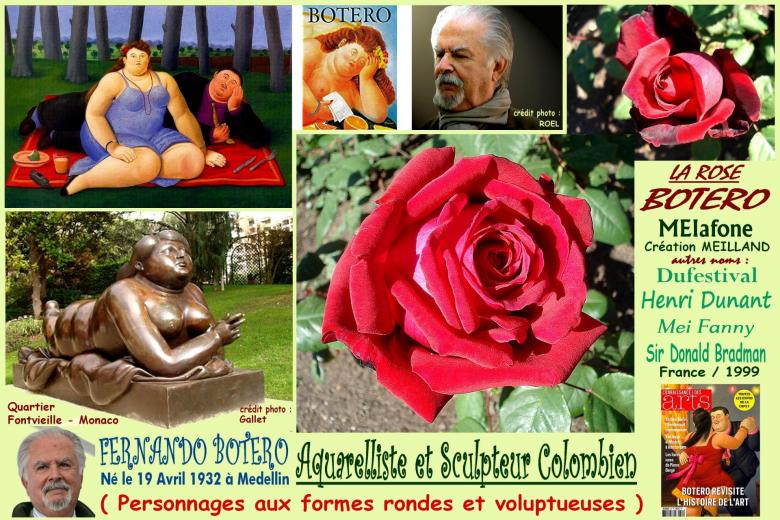 Rose botero meiafone dufestival henri dunant mei fanny sir donald bradman meilland 1999 roses passion