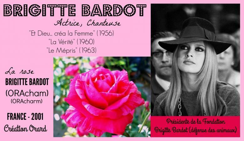 Rose brigitte bardot oracham oracharm ora 3231 94 orard france 2001 roses passion 2j