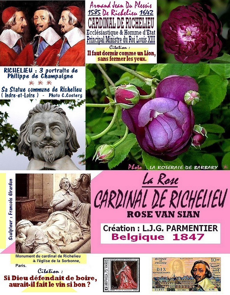 rose-cardinal-de-richelieu-rose-van-sian-celebrites-roses-passion-r.jpg