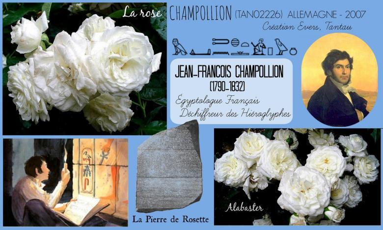 Rose champollion tan02226 alabaster evers tantau roses passion 2j
