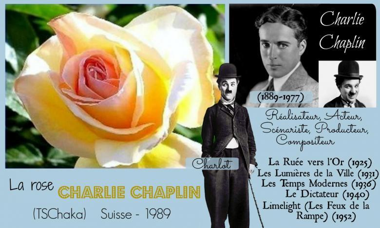 Rose charlie chaplin tschaka tschanz suisse 1989 roses passion 2j