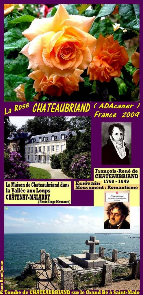 rose-chateaubriand-rose-orange-kumineux-celebrites-roses-passion-1.jpg