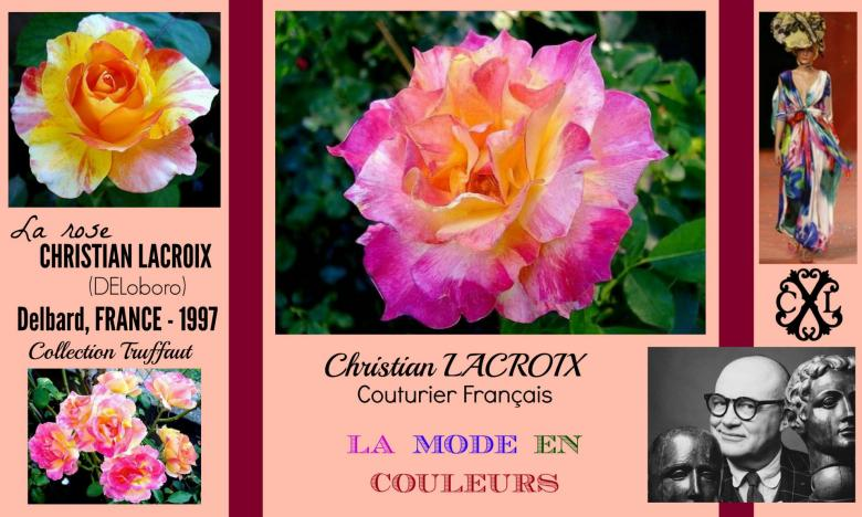 Rose christian lacroix deloboro delbard collection truffaut france 1997 roses passion 2j